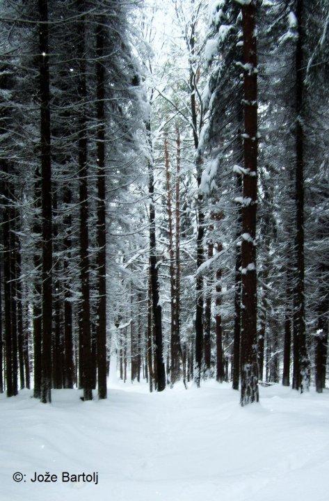 Zimski gozd